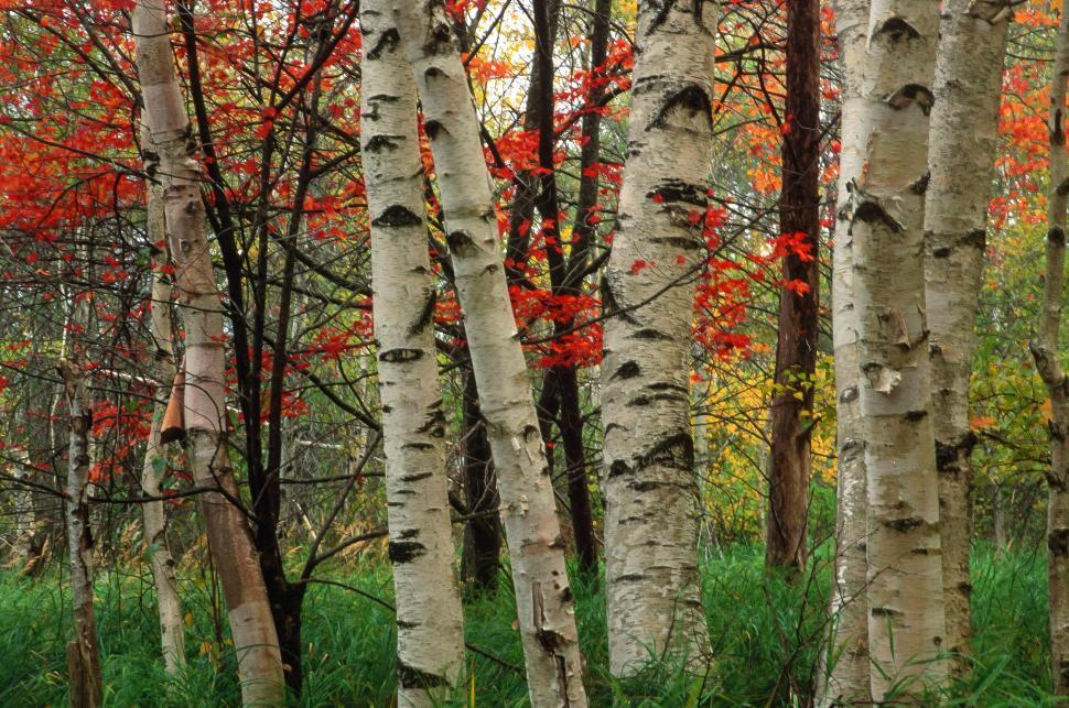 Download Free Stock HD Photo of Autumn Forest Online