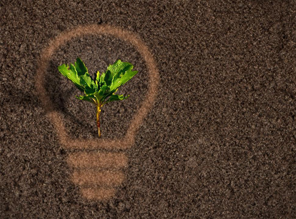 Download Free Stock Photo of Green plant sprout growing within a lightbulb silhouette on soil