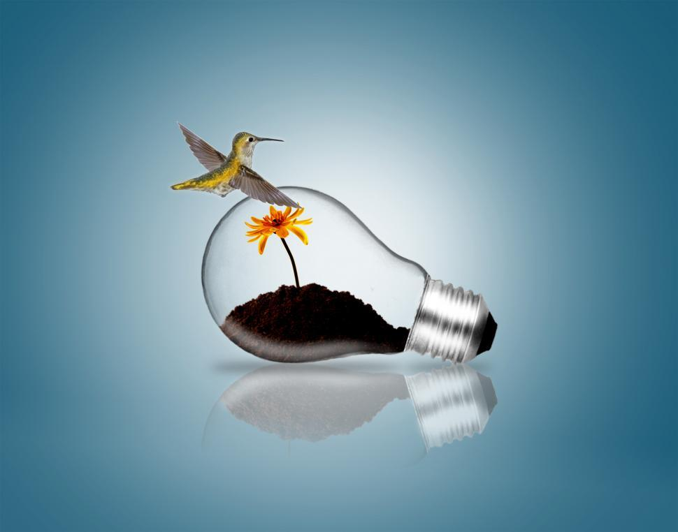 Download Free Stock Photo of Lightbulb with hummingbird and plant sprout