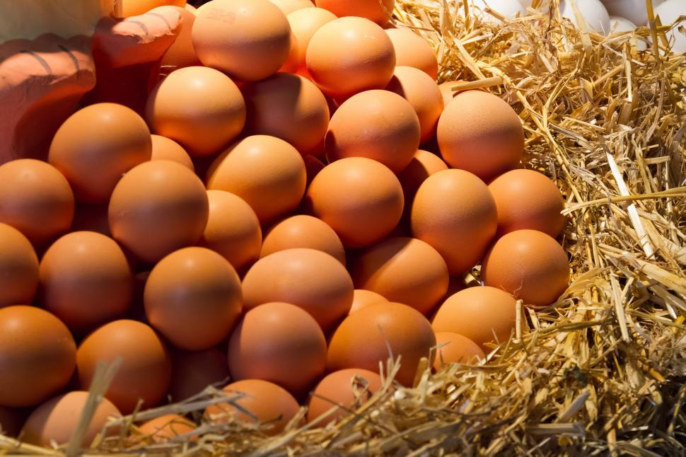 Download Free Stock HD Photo of Brown Eggs  Online
