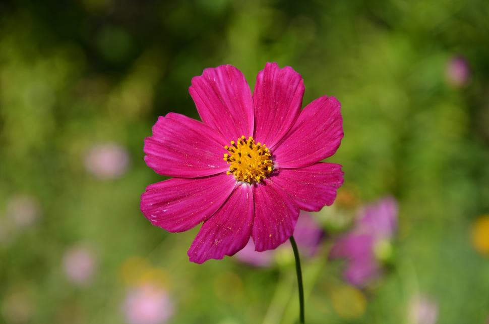 Download Free Stock HD Photo of Pink Flowers Online