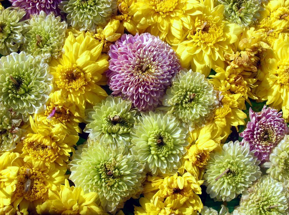 Download Free Stock HD Photo of Floral texture  Online