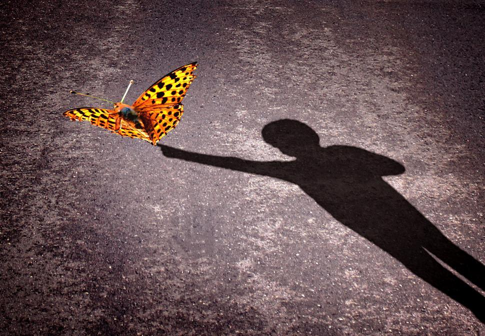 Download Free Stock Photo of Shadow of a little boy touching a butterfly - Discovery and curi