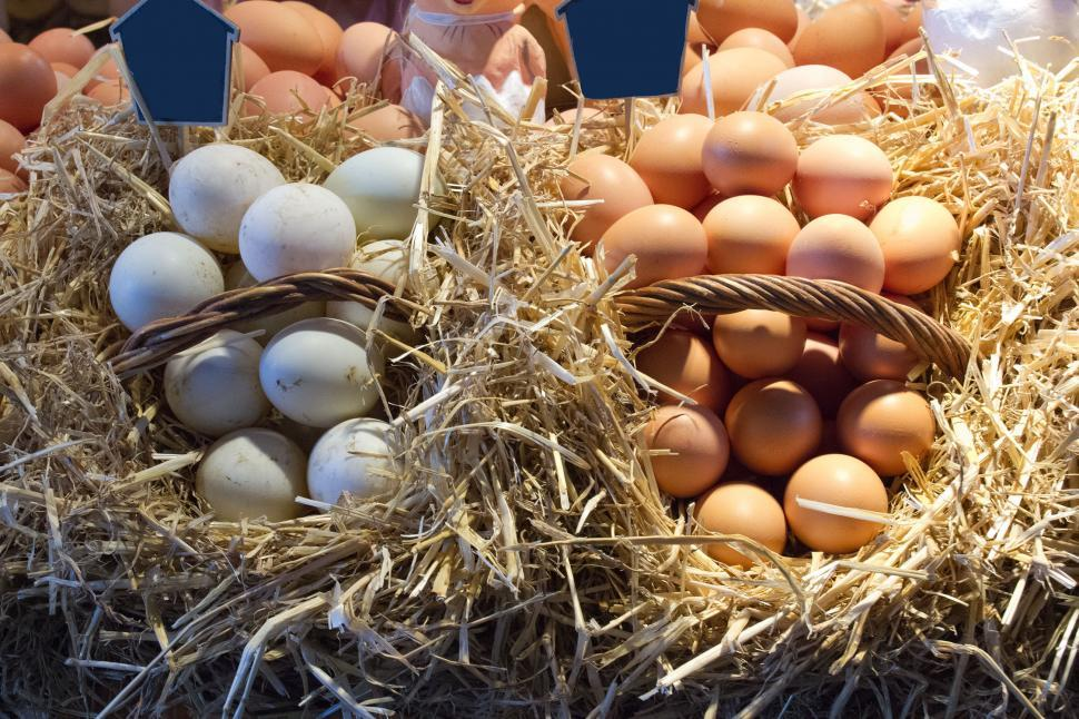 Download Free Stock HD Photo of Eggs at the Market Online