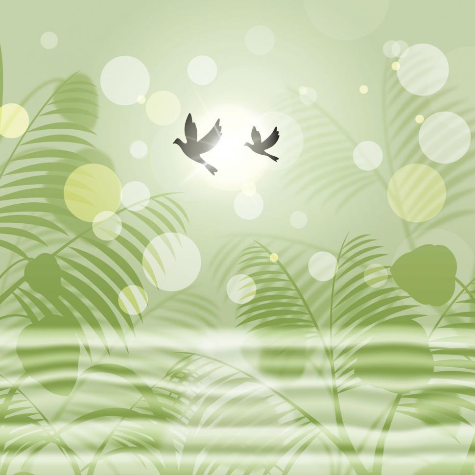 Download Free Stock HD Photo of Doves Bokeh Indicates Freedom Environment And Green Online