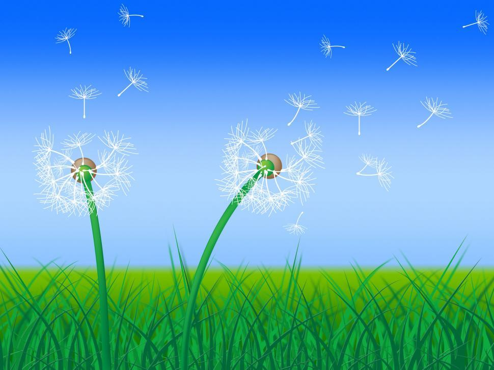 Download Free Stock Photo of Dandelion Sky Shows Green Pasture And Grass