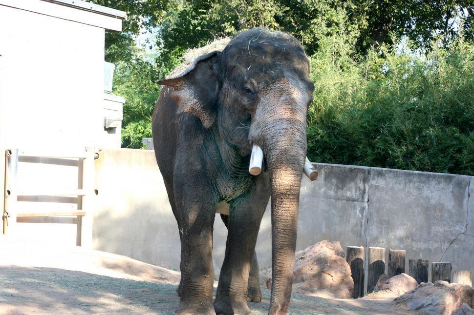 Download Free Stock Photo of Elephant