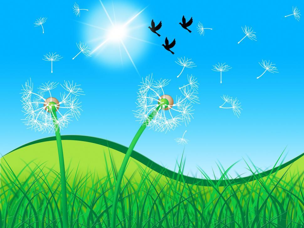 Download Free Stock Photo of Grass Birds Shows Dandelion Seeds And Countryside