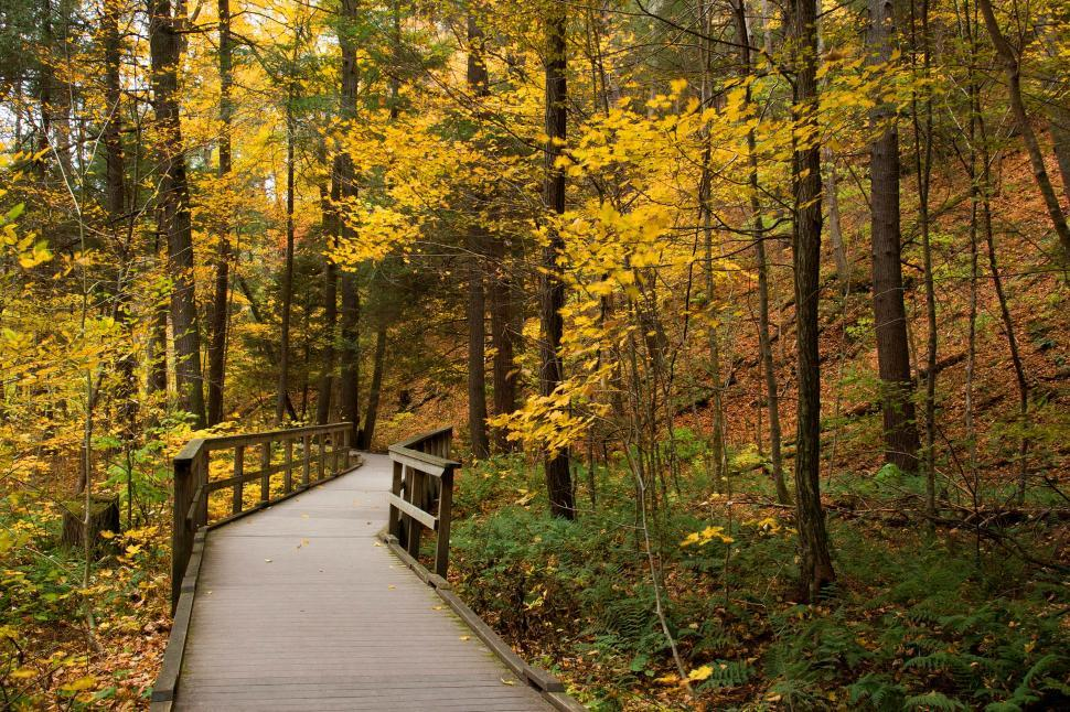 Download Free Stock Photo of Wooden Walkway at Dingman s Ferry Falls PA