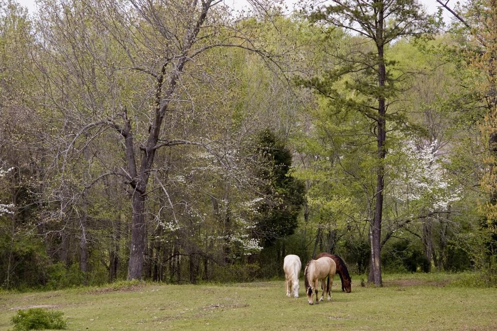 Download Free Stock HD Photo of Horses in Spring Online