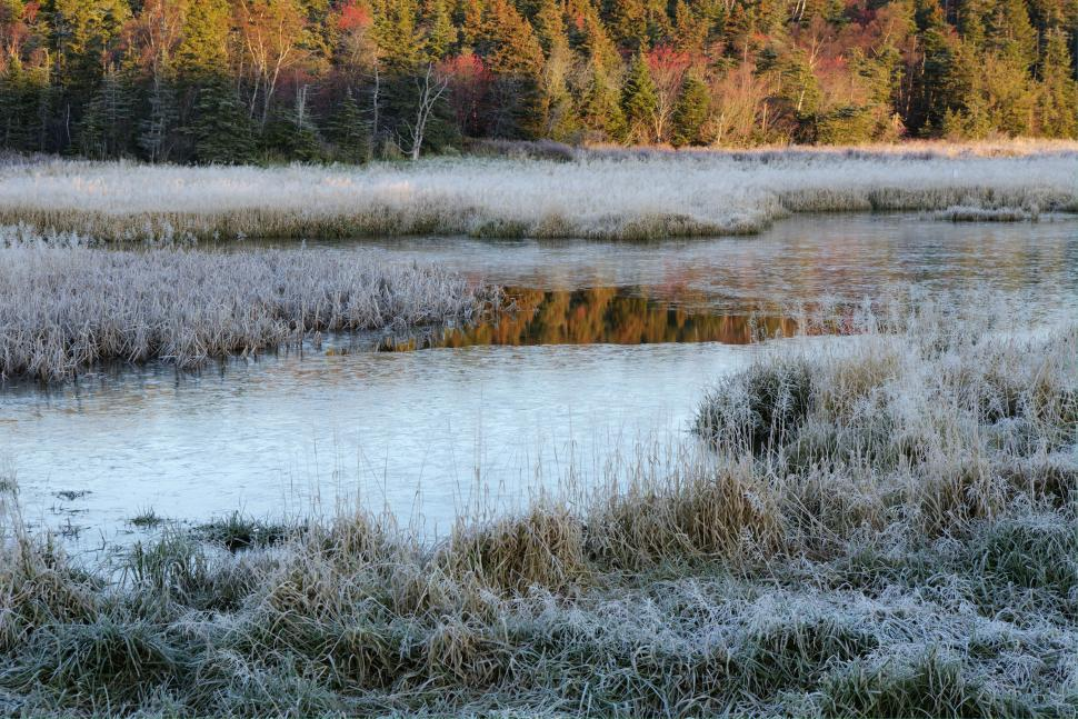 Download Free Stock Photo of Frosty moring at the lake