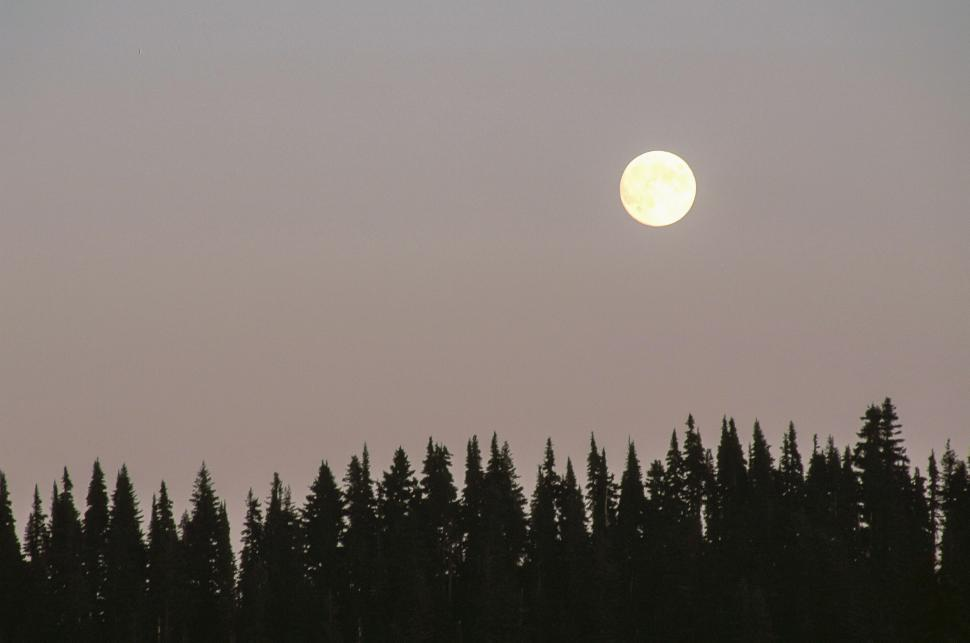 Download Free Stock Photo of Full Moon Rises Above Fir Trees