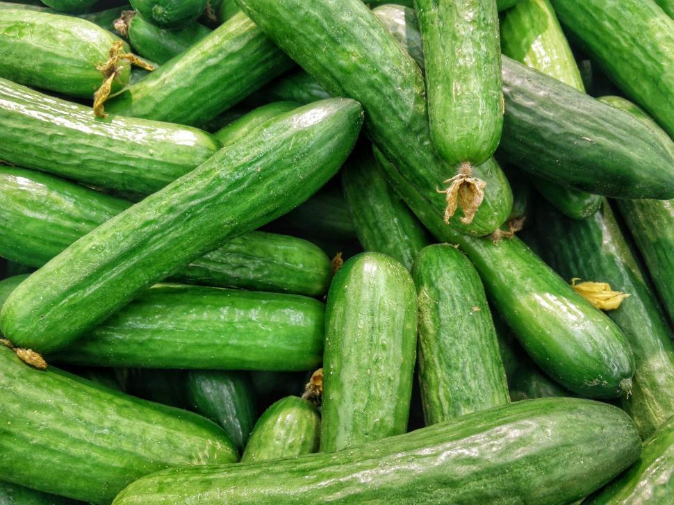 Download Free Stock Photo of vegetable cucumber produce zucchini food summer squash squash bean fresh healthy diet health vegetables vegetarian organic nutrition eat