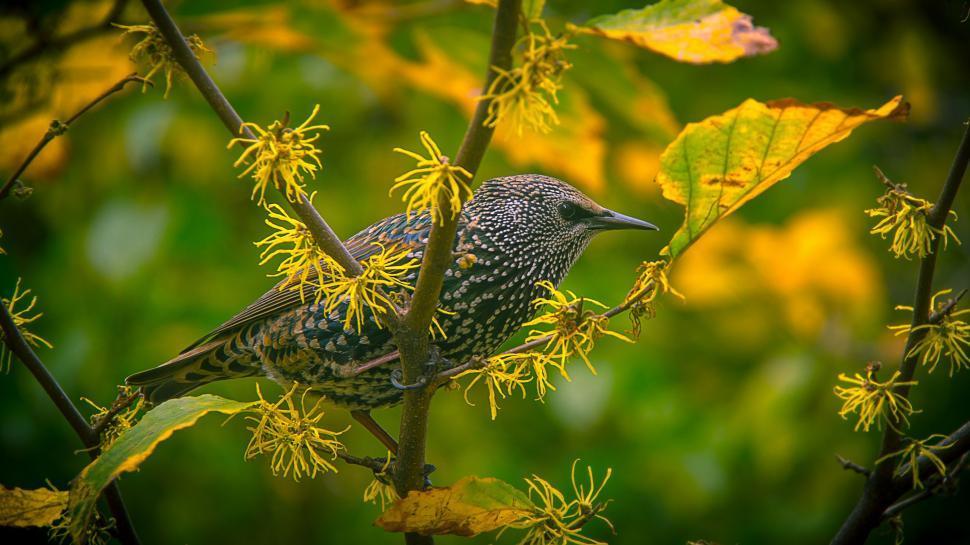 Download Free Stock Photo of bird hummingbird indigo bunting finch