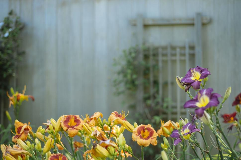 Download Free Stock Photo of Flowers with garden background