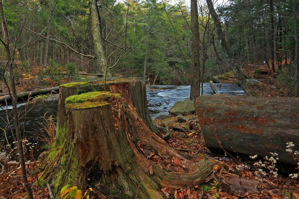 Download Free Stock Photo of Tree Stump on The Bank of a Brook