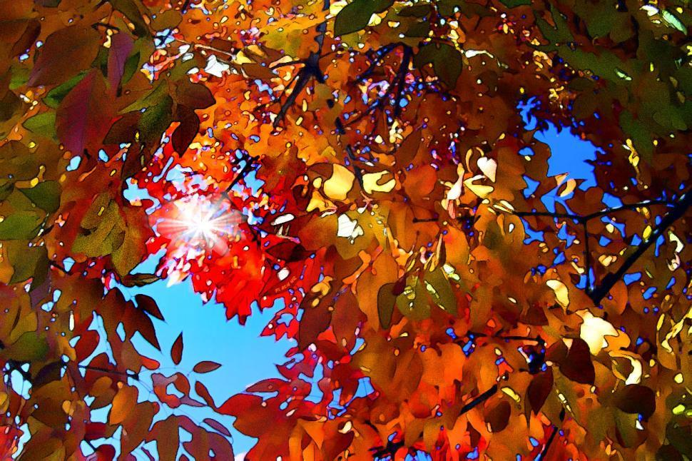 Download Free Stock Photo of Fort Collins Fall