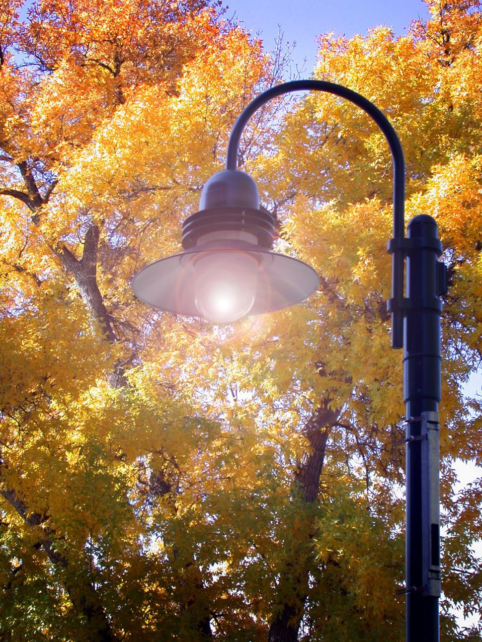 Download Free Stock Photo of Fall Lighting