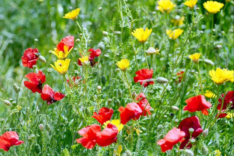 Download Free Stock HD Photo of Red and yellow flowers Online