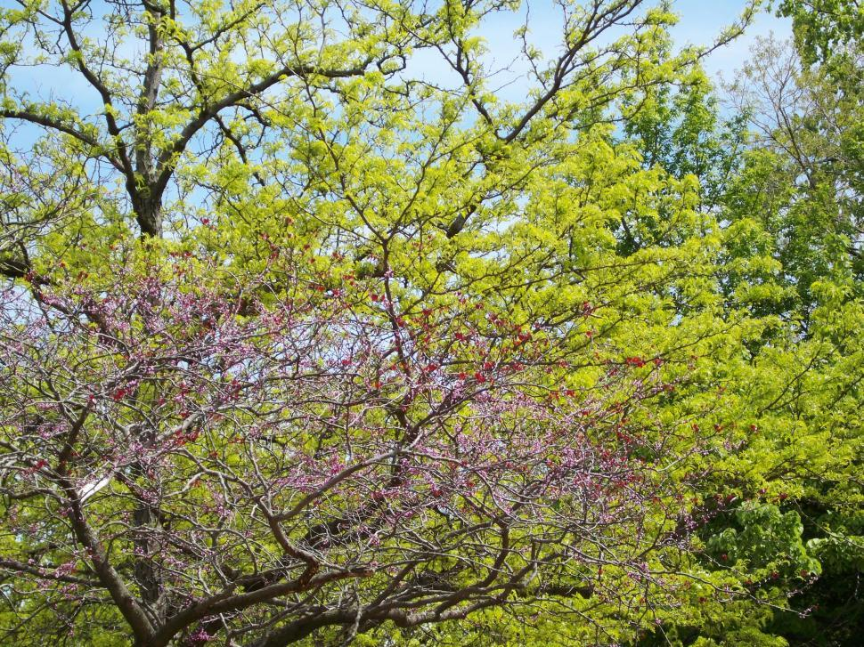 Download Free Stock HD Photo of Spring Trees Online