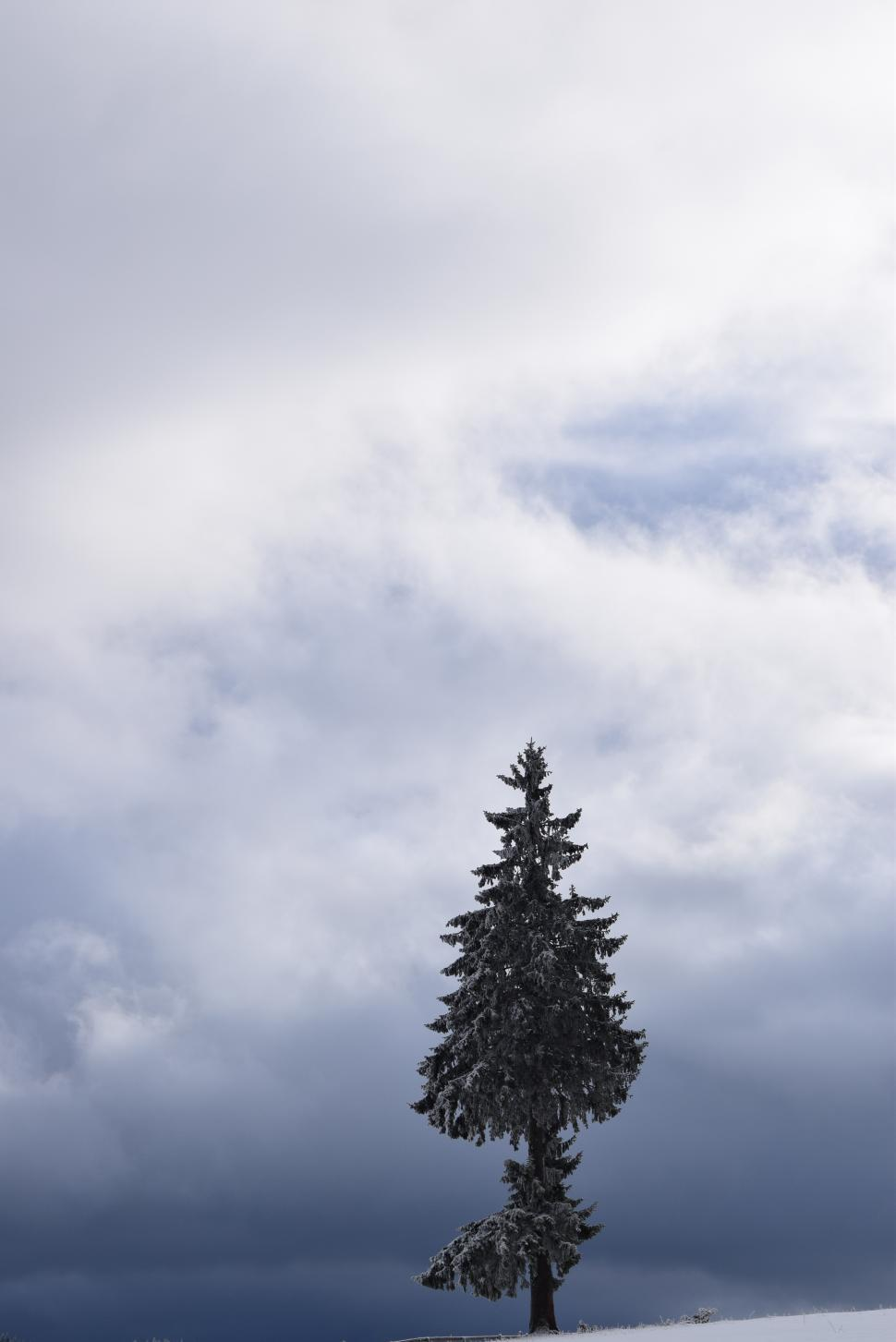 Download Free Stock HD Photo of Single tree covered with snow  Online