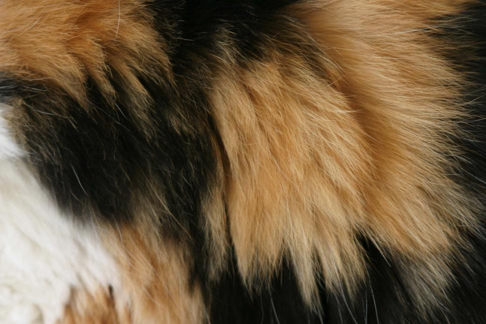 Download Free Stock HD Photo of Calico fur pattern Online