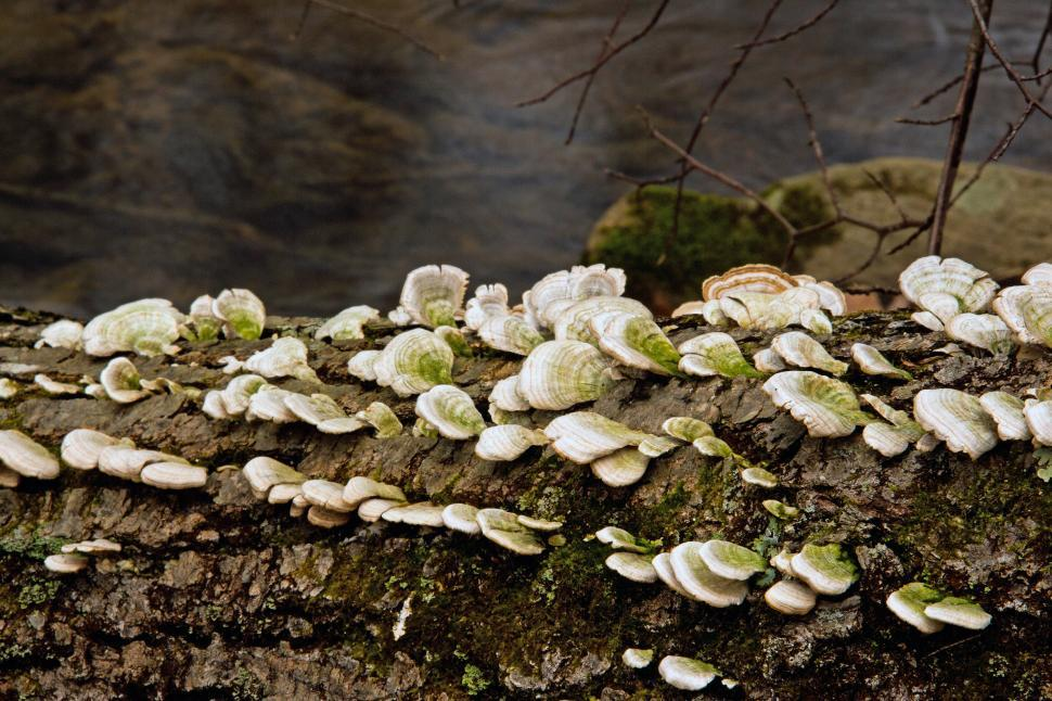 Download Free Stock HD Photo of Tree Fungi Online