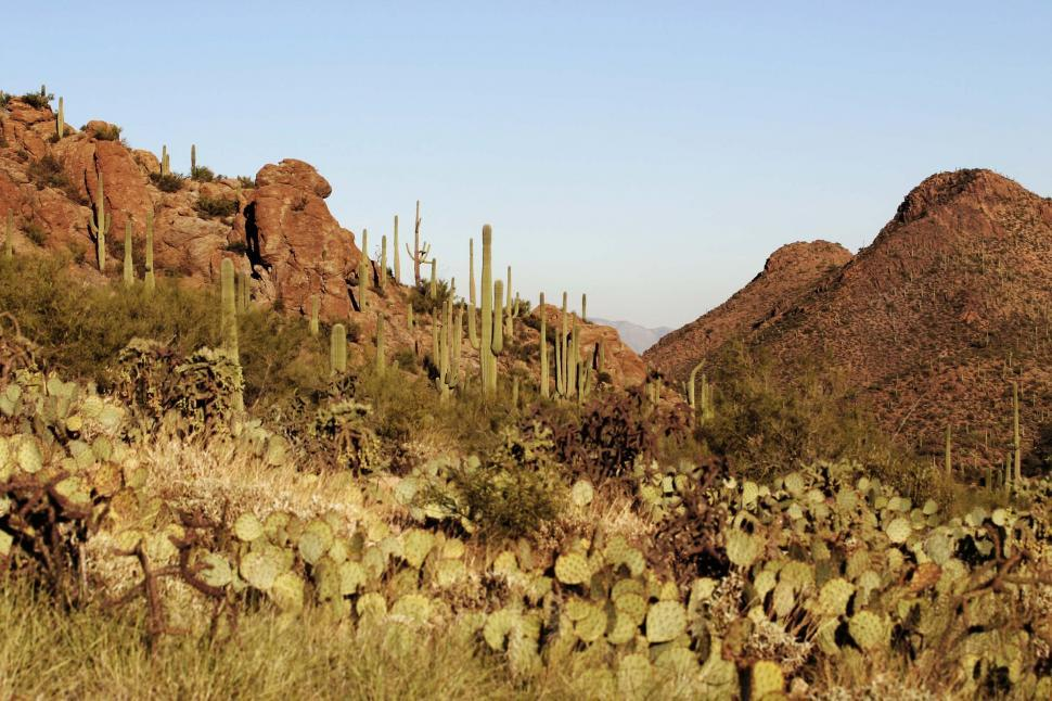 Download Free Stock Photo of Sonoran Desert