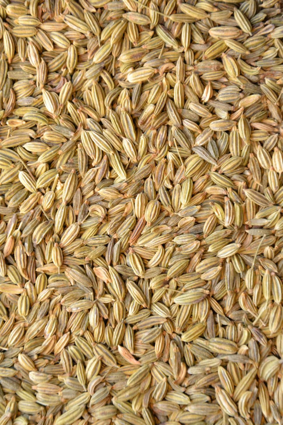 Download Free Stock Photo of Fennel seeds