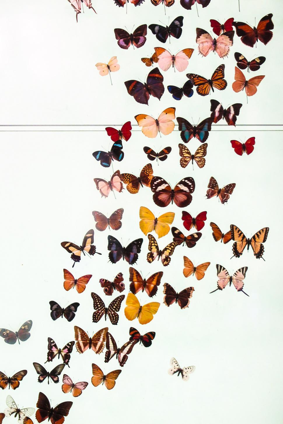 Download Free Stock Photo of Colorful butterfly exhibit