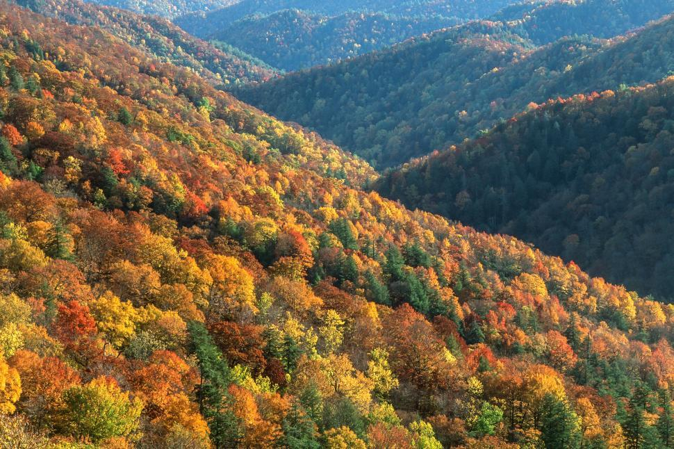 Download Free Stock Photo of Great Smoky Mountains National Park
