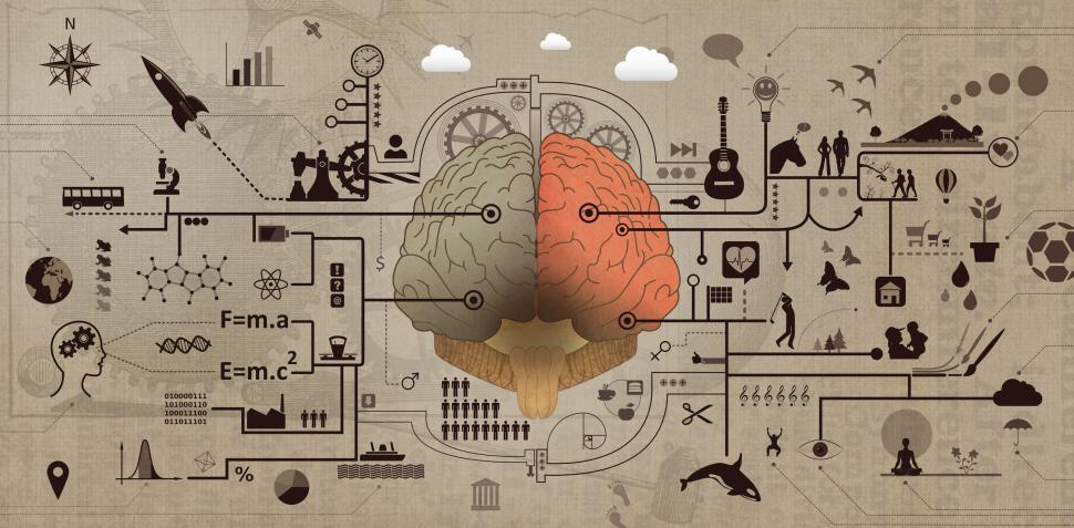 Download Free Stock Photo of Learning and Education - Brain Functions Development Concept