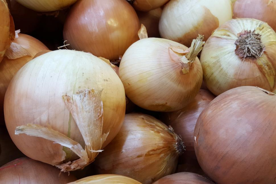 Download Free Stock HD Photo of Yellow Onion Online