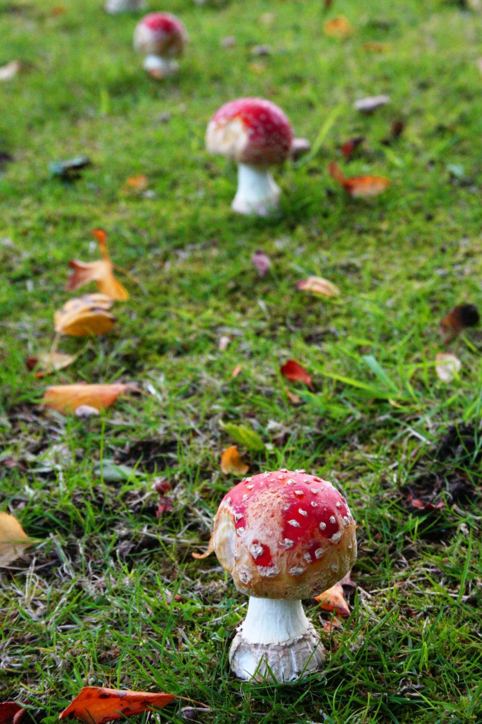 Download Free Stock HD Photo of Toadstools in the garden Online