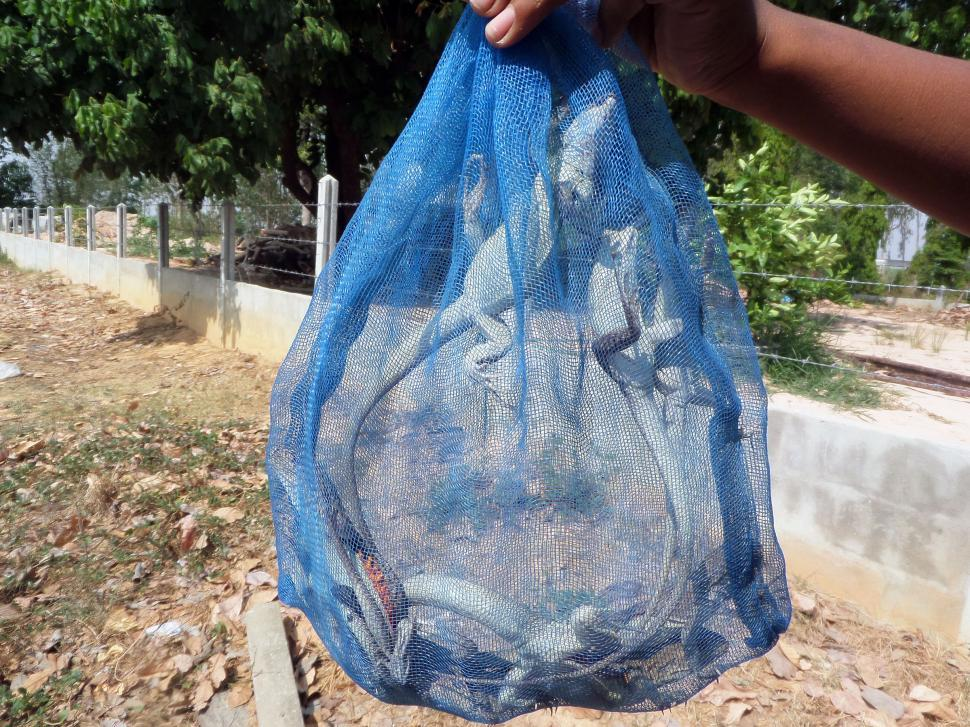 Download Free Stock Photo of Edible butterfly lizards in a bag