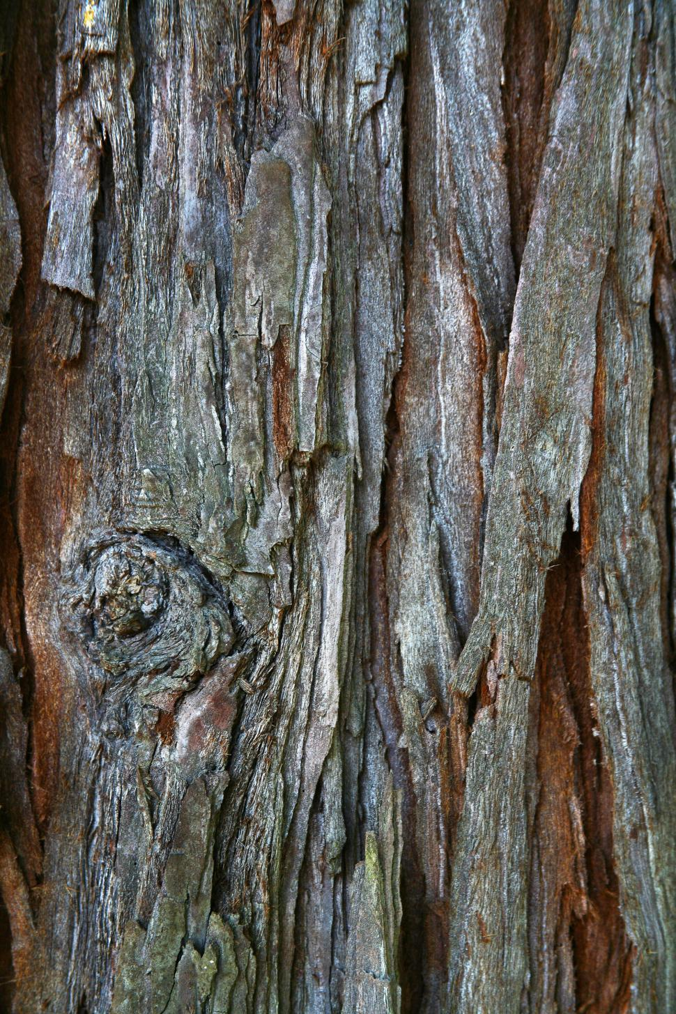 Download Free Stock HD Photo of Tree Bark Online