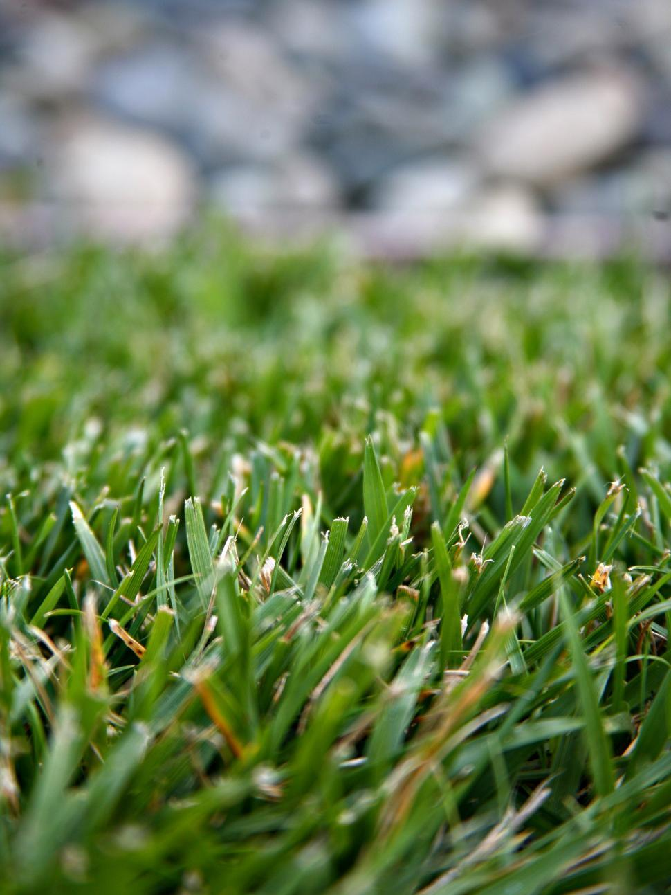 Download Free Stock HD Photo of Grass Perspective Online