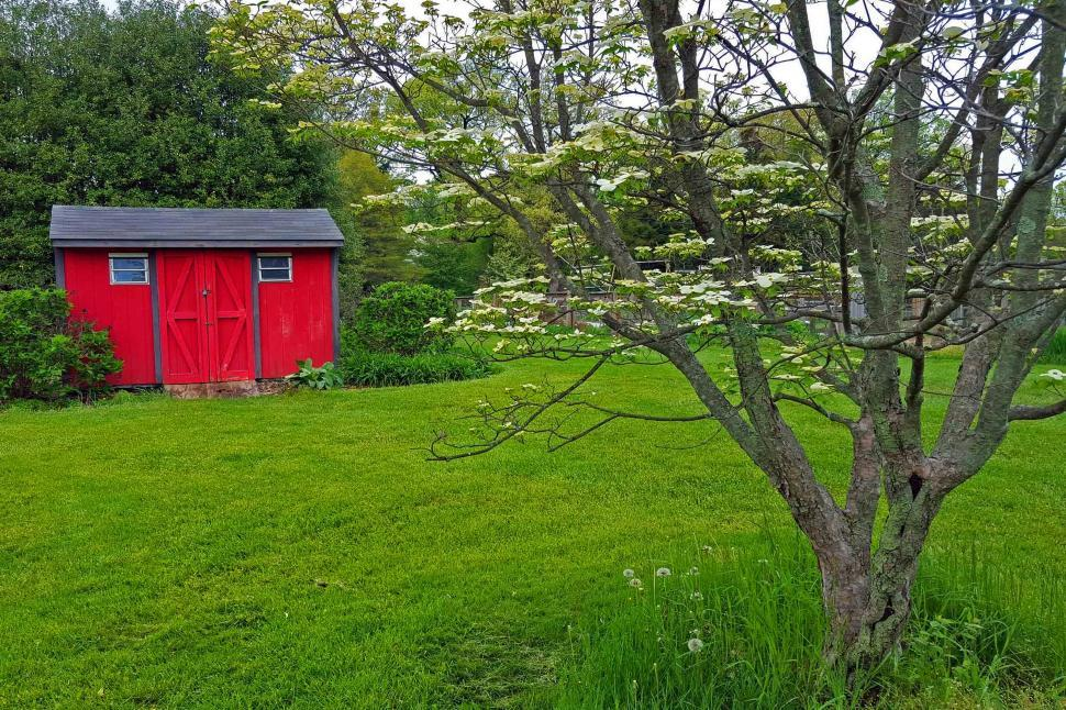 Download Free Stock Photo of Flowering Dogwood Tree Infront Of A Shed