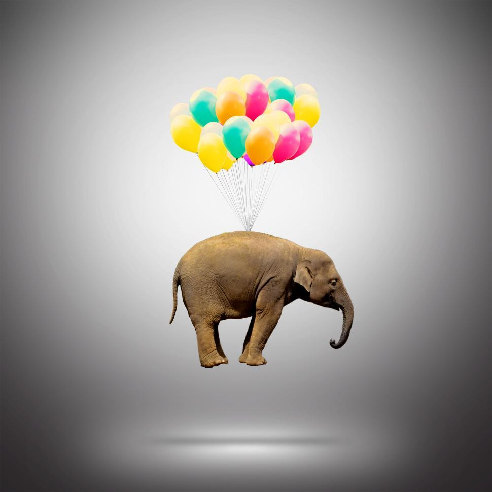 Download Free Stock HD Photo of Elephant Lifted by Balloons - Achievement Concept Online