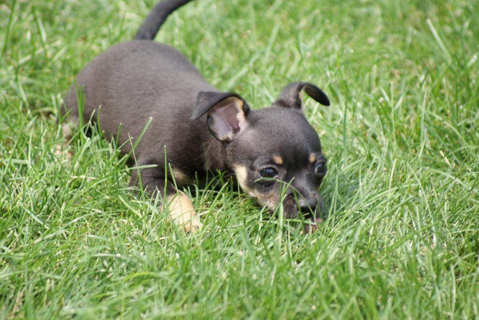 Download Free Stock Photo of Dog laying down in grass