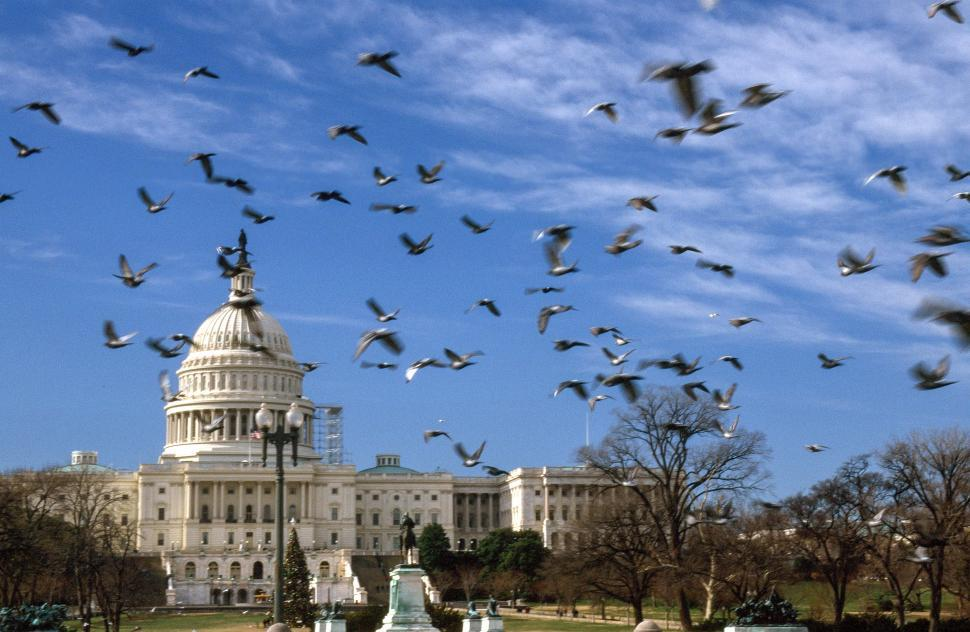Download Free Stock Photo of United States Capitol with pigeons
