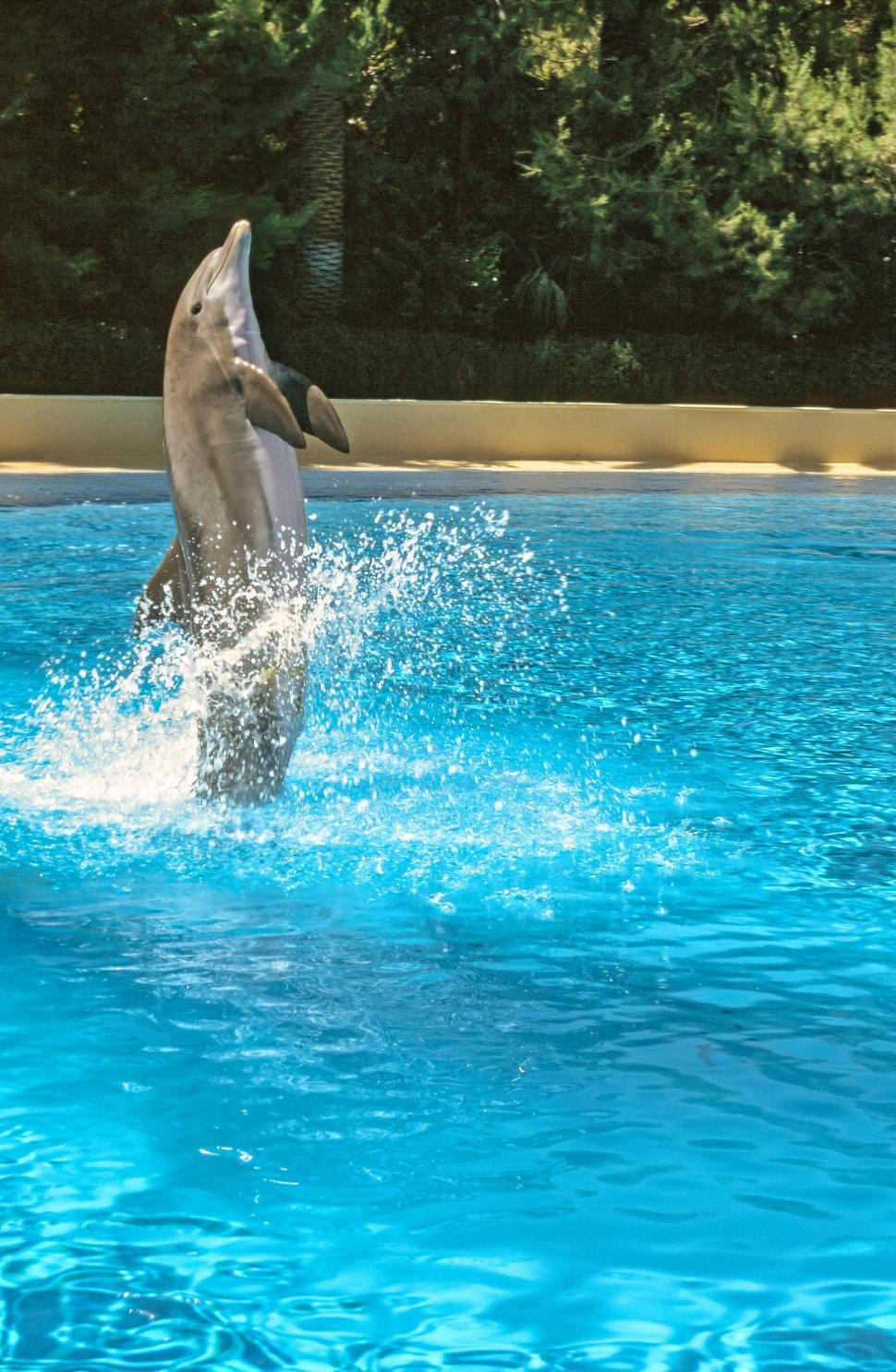 Download Free Stock Photo of Bottlenose dolphin