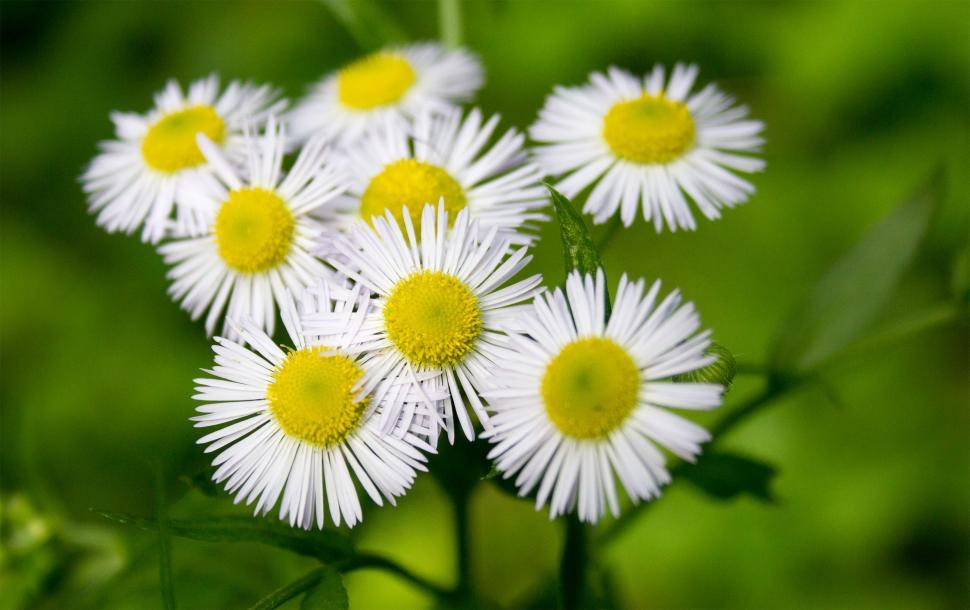 Download Free Stock HD Photo of White flower cluster close up  Online