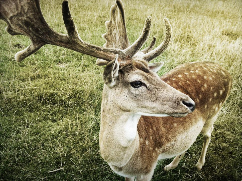 Download Free Stock Photo of Close up of a deer