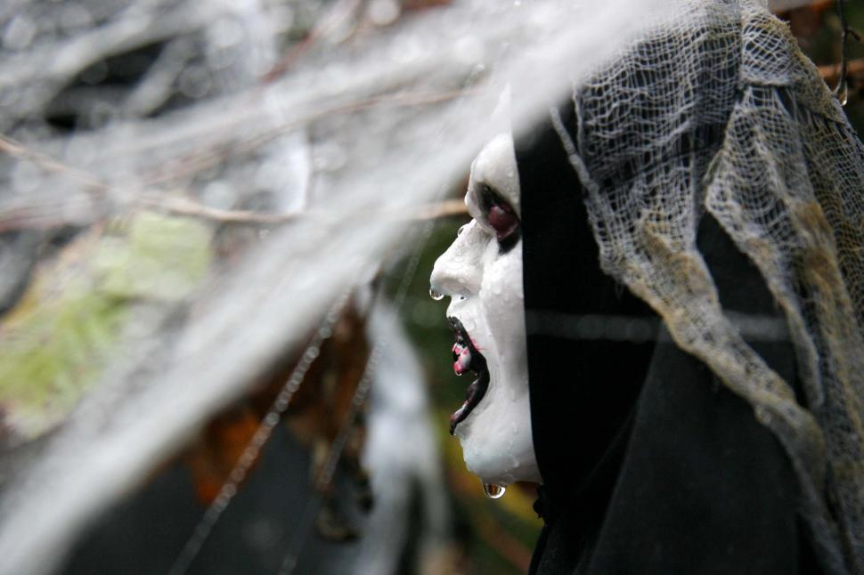 Download Free Stock Photo of halloween scary frightening spooky ghoule decoration haunted web spider evil scare profile wet fangs bloody
