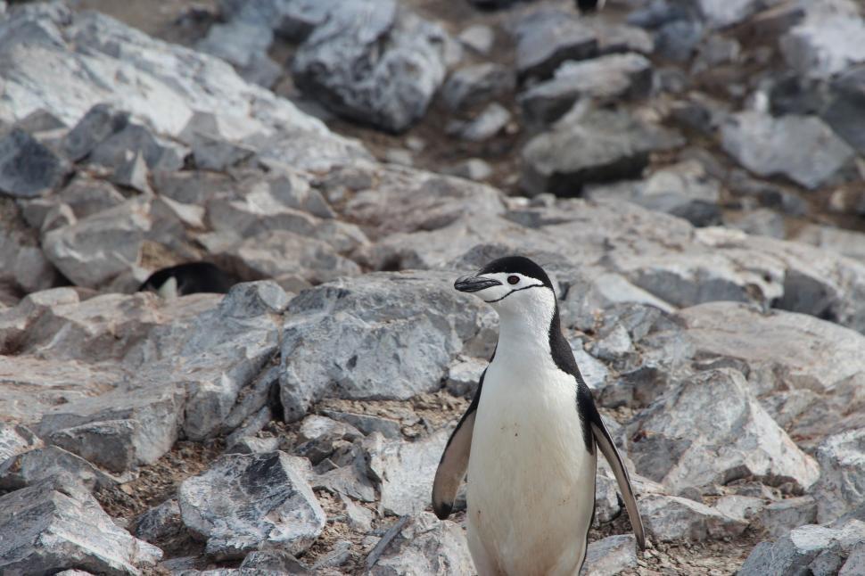 Download Free Stock Photo of Nature clothes suits plastic hanging shipping commerce sales penguin seabird aquatic bird bird ptarmigan grouse