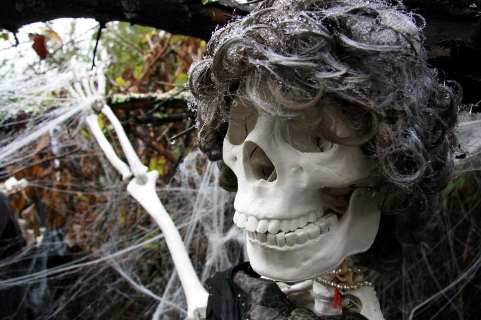 Download Free Stock Photo of halloween scary frightening spooky ghoule skeleton decoration haunted skull web spider evil scare bones wig wet teeth