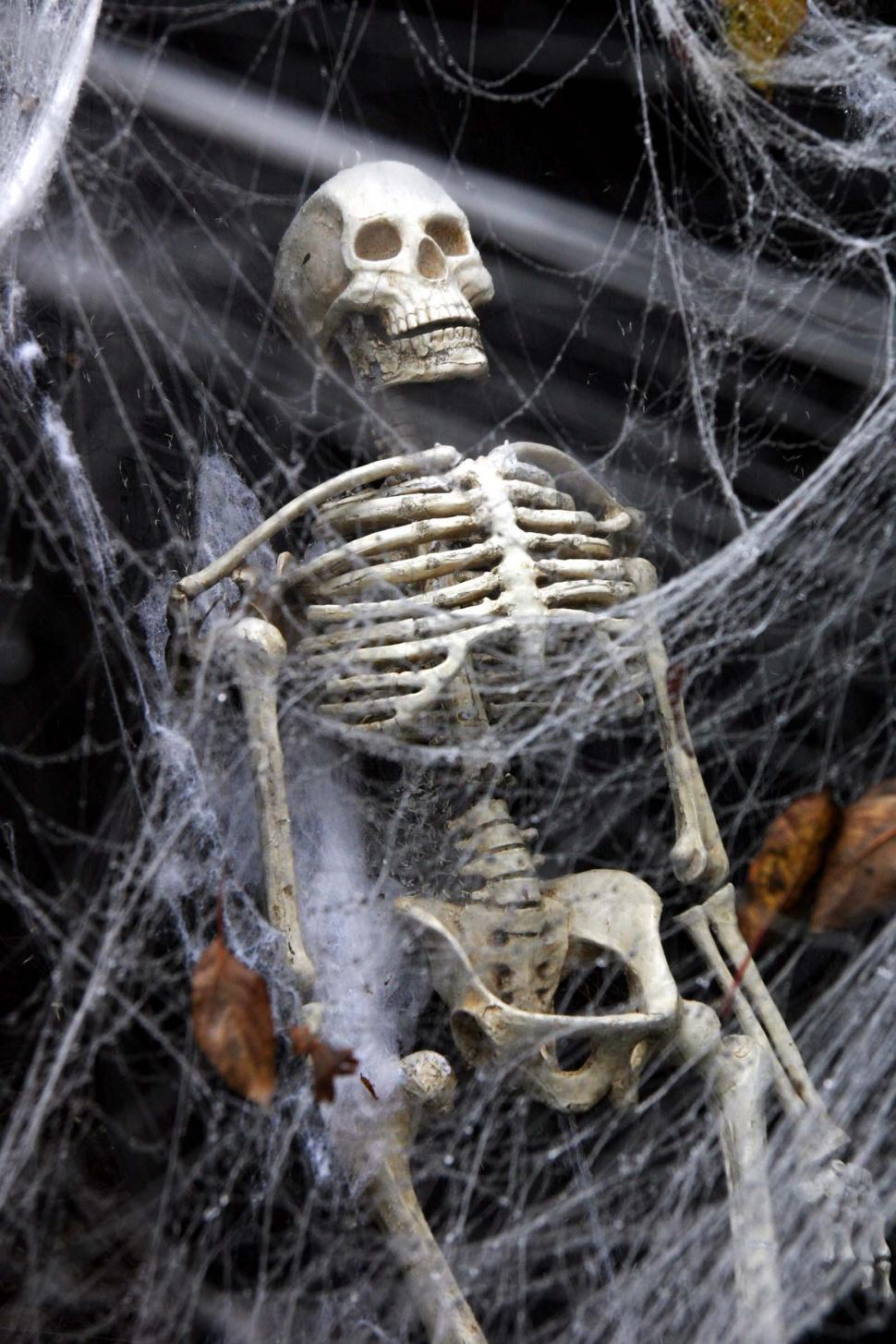 Download Free Stock Photo of halloween scary frightening spooky ghoule skeleton decoration haunted skull web spider evil scare coffin bones human casket