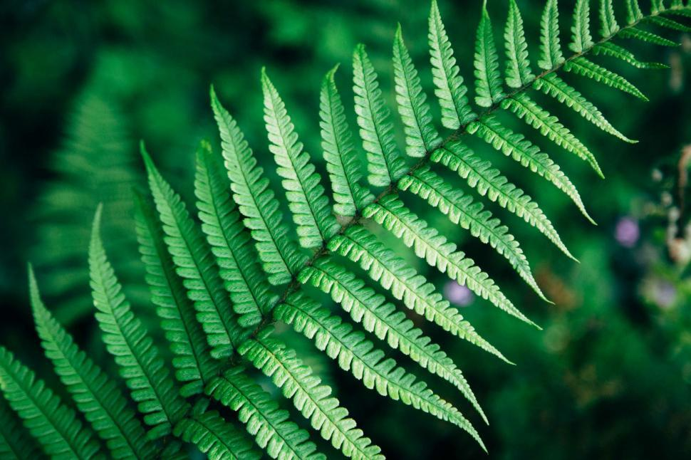 Download Free Stock Photo of Nature fern plant leaf plant part