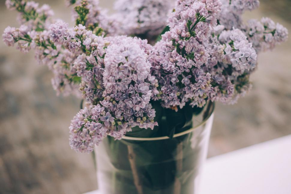 Download Free Stock Photo of Nature lilac pattern floral design pink wallpaper flower graphic spring color decoration art shape texture backdrop season leaf